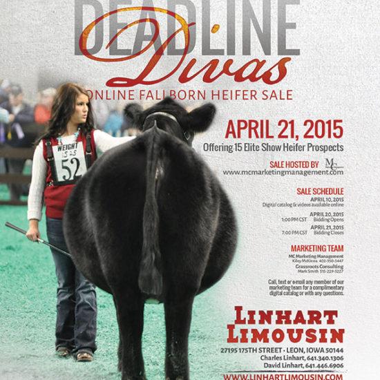 Linhart Limousin Divas Online Sale