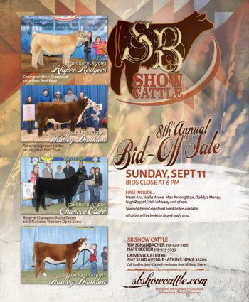 SB Show Cattle - IA