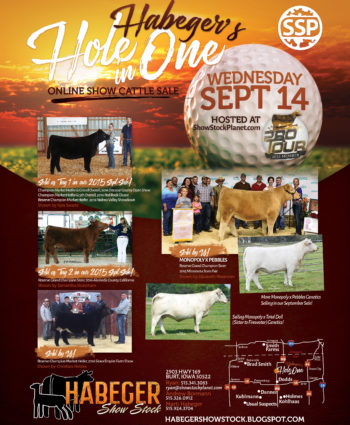 Habeger Show Stock - IA