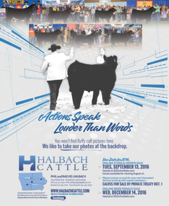 Halbach Cattle - IA