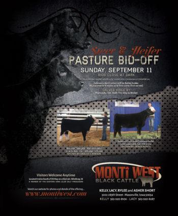 Monti West Black Cattle - IA